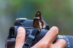 Butterfly on a camera in hand Stock Image