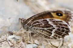 Butterfly. The butterfly camouflage on stone Stock Images