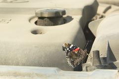 Butterfly on the car engine. royalty free stock images