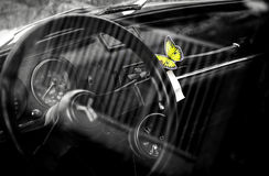 Butterfly in the car Royalty Free Stock Photos
