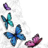 Butterfly card Royalty Free Stock Photo