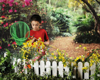 Butterfly Catcher Stock Image