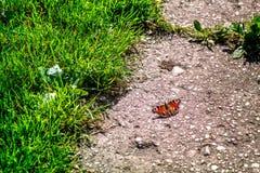 Butterfly catcher. Outdoor activities in summer. stock photos