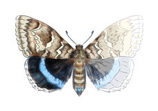 Free Butterfly Catocala Fraxini. Stock Photos - 25619193