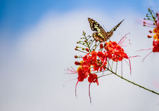 Butterfly caught red flowers in Blue sky  background Stock Image