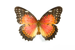 Butterfly Cethosia biblis isolated. On white background stock photography