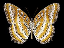Butterfly Cethosia biblis underside stock images