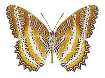 Butterfly Cethosia biblis underside. On a white background stock images