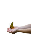 Butterfly on child hand Stock Photography