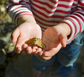 Butterfly in child hands. Small butterfly in child hands Royalty Free Stock Photo