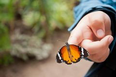 Butterfly on child's hand Royalty Free Stock Images