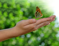 Butterfly on the childen hand Royalty Free Stock Photos