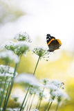Butterfly on the chive flower Stock Images