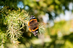 Butterfly on a Christmas tree Stock Image