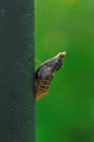 Butterfly Chrysalis. Stay on branches royalty free stock photo