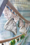 Butterfly and chrysalises Royalty Free Stock Photos