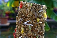 Butterfly chrysalises at tree stump Stock Photo