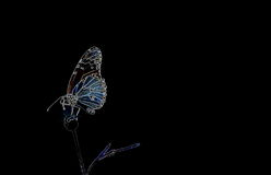 Butterfly. Is climbing on flower Stock Photo