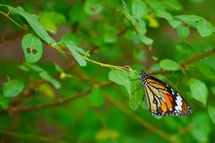 Butterfly cling to leaves in the field Stock Image