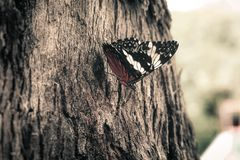 Butterfly close Royalty Free Stock Photo