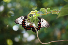 Butterfly close up. Close up of underside of butterfly resting on plant with decorative wings Stock Photos