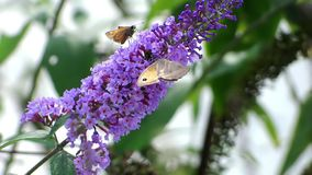 Butterfly close up stock footage