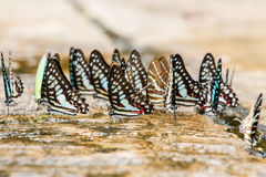 Butterfly close up pattern. A family of yellow butterfly resting on the river bank Stock Photo