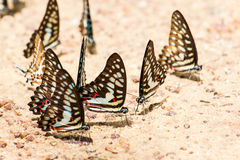 Butterfly close up pattern. A family of yellow butterfly resting on the river bank Royalty Free Stock Photography