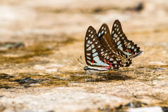 Butterfly close up pattern. A family of yellow butterfly resting on the river bank Royalty Free Stock Photo