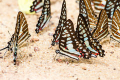 Butterfly close up pattern. A family of yellow butterfly resting on the river bank Stock Image