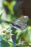 Butterfly close up Stock Images