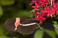 Butterfly closeup. Stock Photos