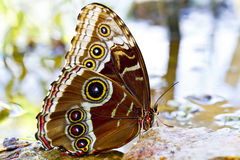 Butterfly closeup Stock Photography