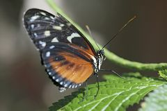 Butterfly closeup Stock Image