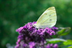 Butterfly closeup copy space background Stock Images