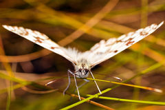 Butterfly closeup Royalty Free Stock Images