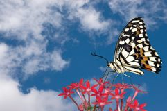 Butterfly and Clouds Royalty Free Stock Image