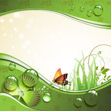 Butterfly, clover and grass with drops. Of water over springtime background Royalty Free Stock Photos
