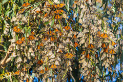 Butterfly Cluster Royalty Free Stock Photos