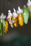 Butterfly Cocoons Hanging on a Twig Stock Photo