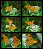 Butterfly collage Stock Photos