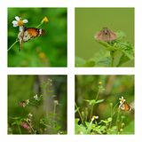 Butterfly Collage Royalty Free Stock Image