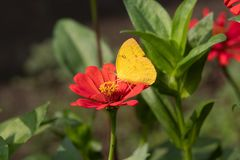 Butterfly collect nectar. Here now is spring season, and many flower stock photography