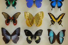 Butterfly collecting and rich variety Stock Image