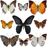 Butterfly Collection. Isolated on white Royalty Free Stock Images