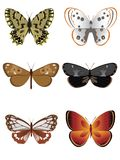 Butterfly collection 3 Royalty Free Stock Image