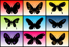 Butterfly collection. Vector illustration. Color abstract with butterflies Royalty Free Stock Photography