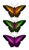 Butterfly Collection. Decorative image from an original 14x24 illustration of colorful butterflies. / AW-007 stock illustration