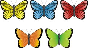 Butterfly collection Stock Photos