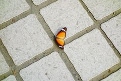 Butterfly. A color beautiful butterfly fall to the ground, like a piece of dead leaves Stock Image